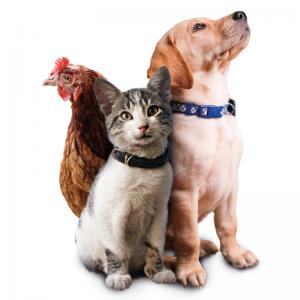 Désinfection de l'environnement animal
